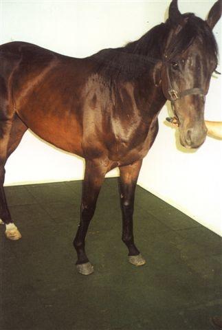 Dalles amortissante pour box de chevaux
