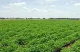 développement du secteur Agricole