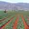 Les filières agricoles