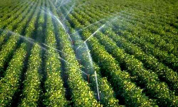 Le secteur agricole algérien, attire les investisseurs hollandais