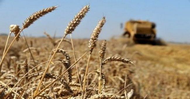 Agriculture: vers une autosuffisance en blé dur dans 3 à 4 ans