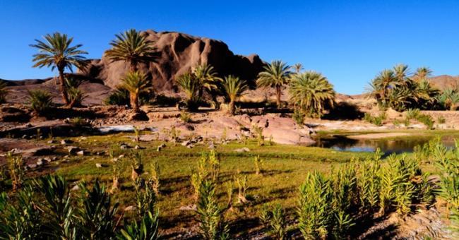 D&eacuteveloppement des oasis du sud alg&eacuterien : l'UE soutient les acteurs &eacuteconomiques
