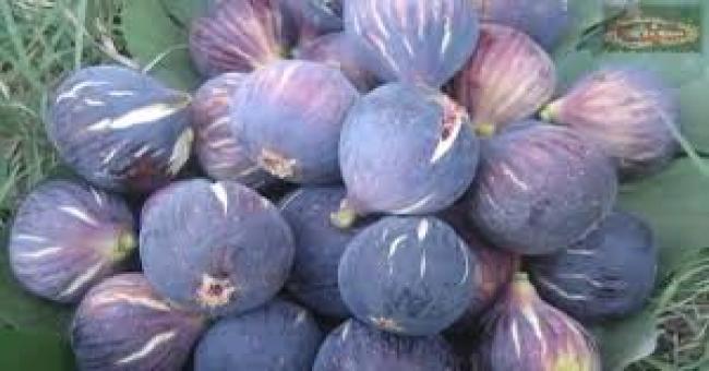 Production de figues fraîches : l'Algérie occupe la troisième place à l'échelle mondiale
