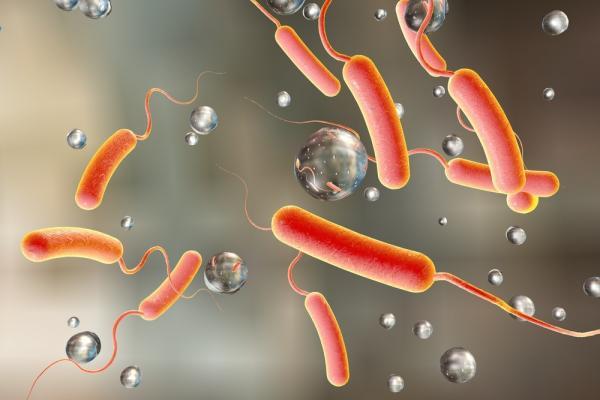 Santé : 41 cas de choléra confirmés dans quatre wilayas