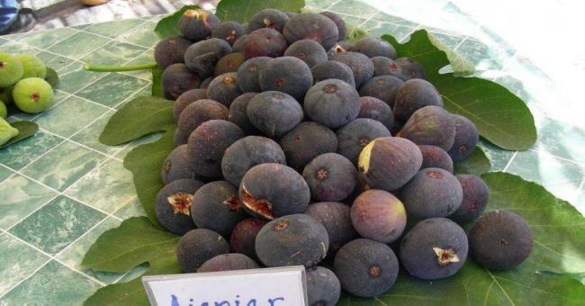 L'Algérie est le troisième producteur mondial de figues