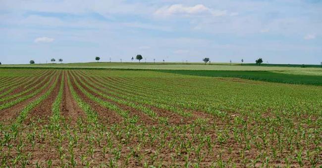 Agriculture : récupération de 300 000 hectares de terres agricoles