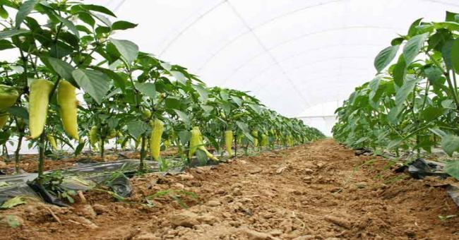 Forum algéro-allemand : Les opportunités d'investissements dans le secteur agricole