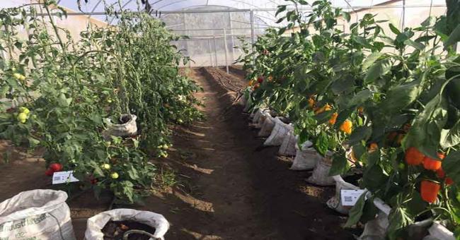 Développement agricole : l'Algérie veut s'inspirer de l'expériences des Pays -Bas